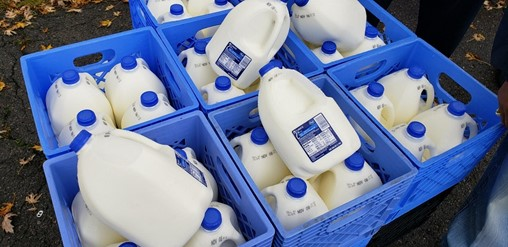 Kroger Buys and Redirects Dairy Farmers' Surplus Milk to Feeding America Food Banks