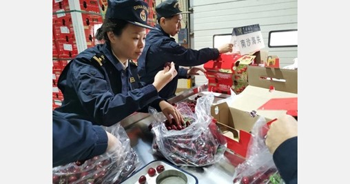 The Chinese Port of Nansha Offers an Express Service for Chilean Cherries