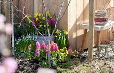 5 quick ways to prepare your garden for spring