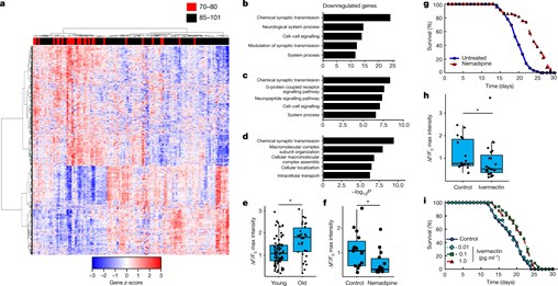 Regulation of Lifespan by Neural Excitation and REST