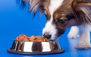 Pet Market Driven By Uptick in Small Dogs, Aging Pets