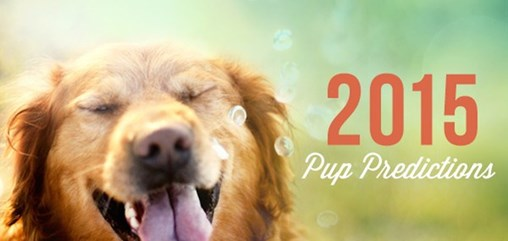 2015 Pup Predictions from DogVacay