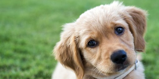 The 3 Surprising Ways 'Pet Parents' Are Treating Their Pets Like Humans